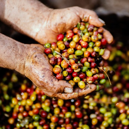 close-up-coffee-bean-crops-1459339.jpg