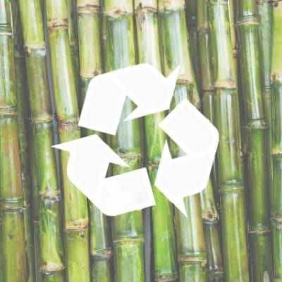 Sukkerrør-rs.jpg